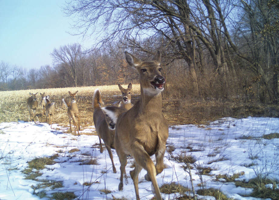 A game camera spots a group of deer running through a field in Greene County.