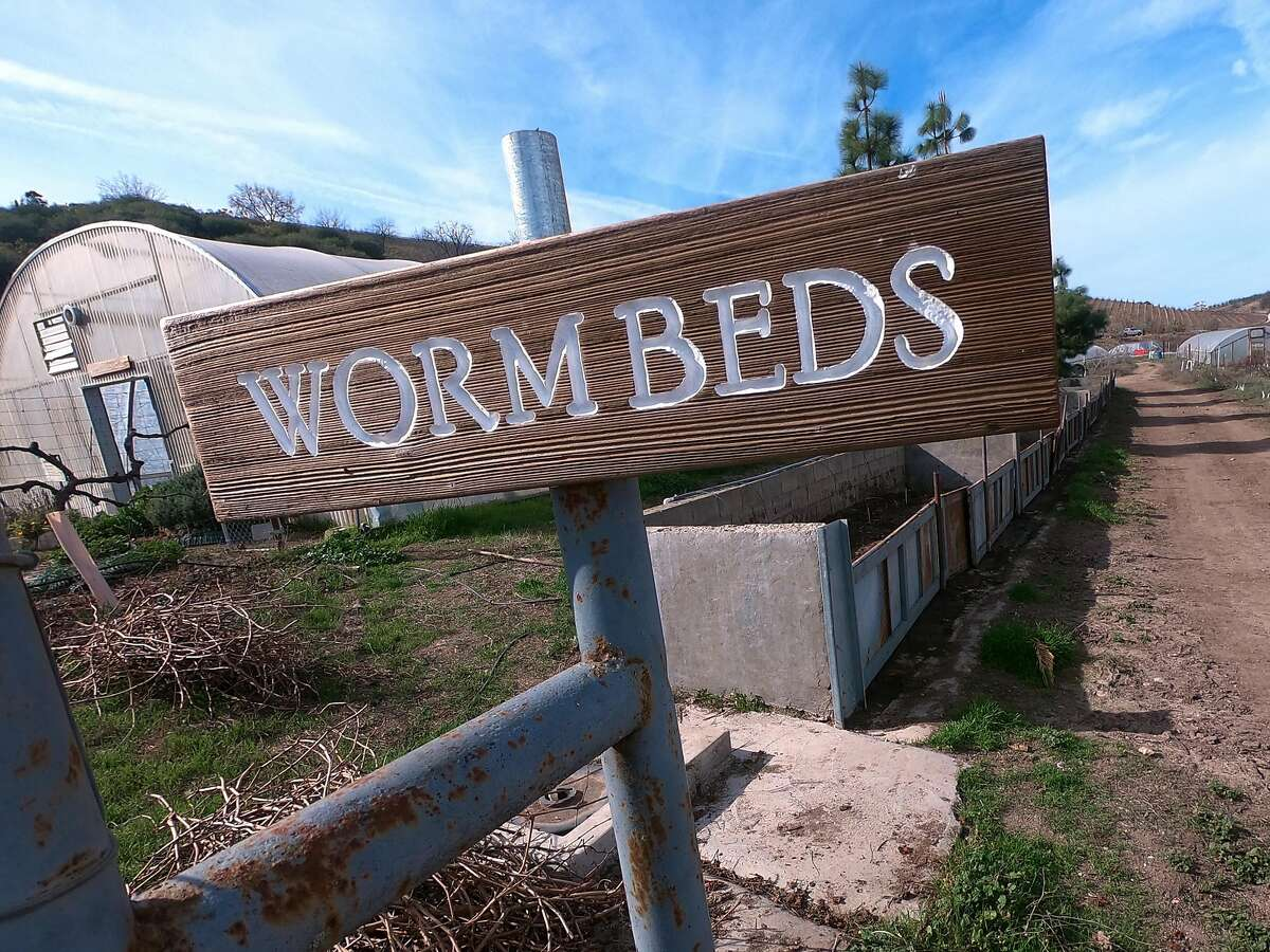 The worm beds at Mt. Olive Organic Farm in Paso Robles.