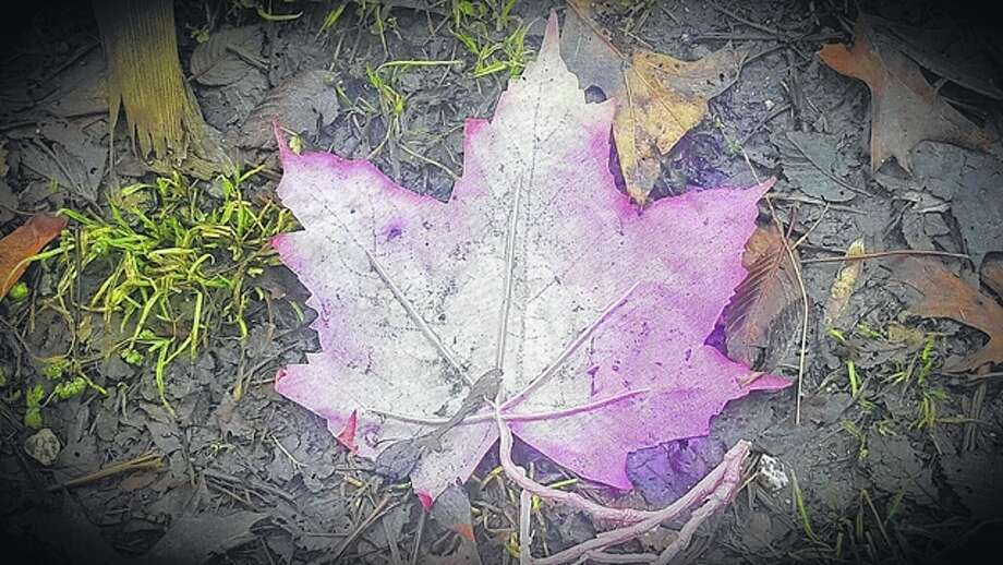 A colorful leaf rests on the winter-browned ground.