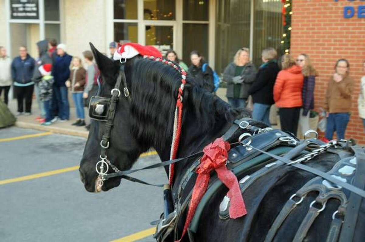 """""""Prancer,"""" known the rest of the year as """"Harry,"""" pulls a carriage owned by the St.Louis Carriage Company during Sunday's Christmas Walk."""