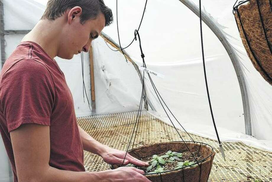 Franklin High School senior Johnny Pasley tests soil.