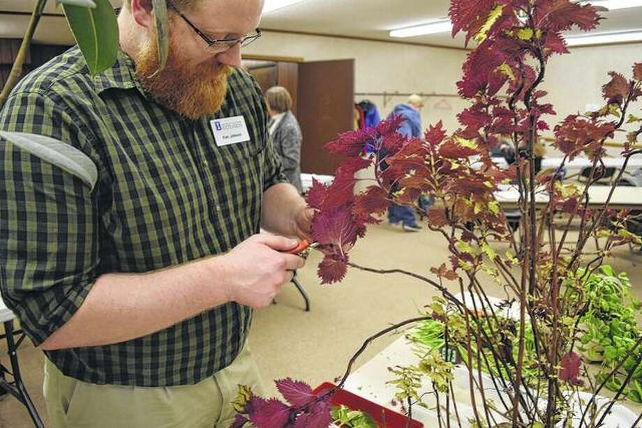 University of Illinois Extension horticulture educator Ken Johnson takes a cutting from a coleus plant for propagation purposes. Johnson coordinates and teaches some of the master gardener training. Photo: Greg Olson | Journal-Courier
