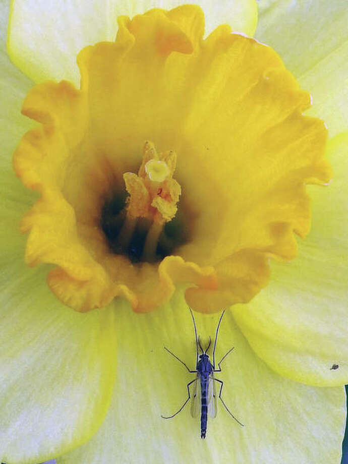 A bug takes a break on the petals of a flower. Photo: Elizabeth King | Reader Photo