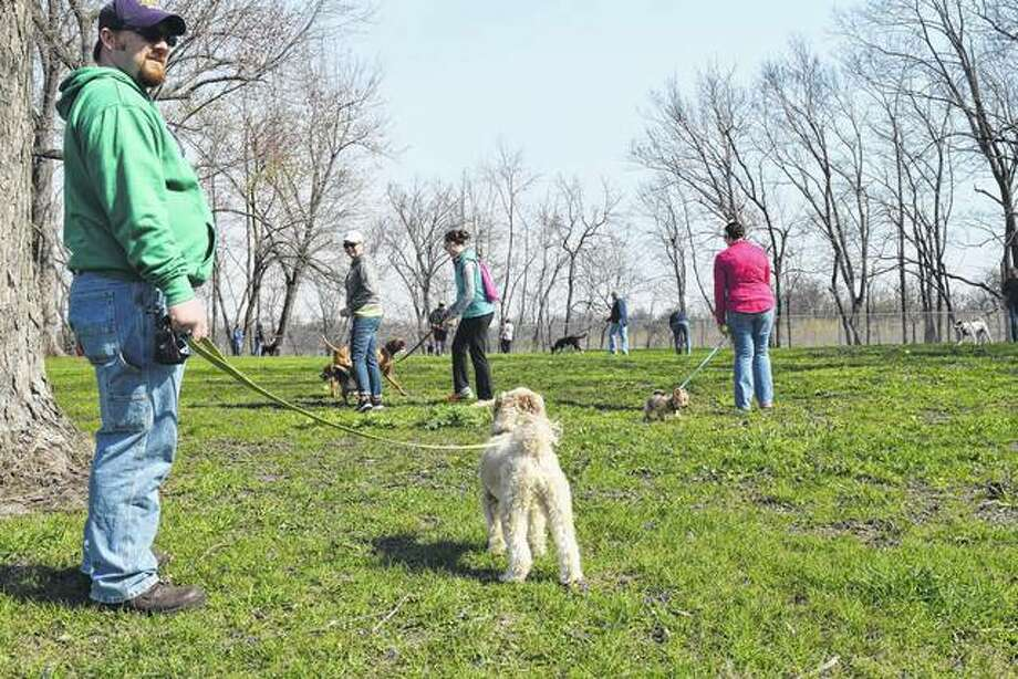 Aaron Gibbs of Springfield watches his poodle/Shih Tzu mix, Stark, look for tennis balls Saturday during the second annual Bark Park Bunny Bash at Jacksonville's PetSafe Dog Park on East Vandalia Road. About 100 people participated in the event, which raised money for future upgrades at the dog park, including the installation of water fountains for dogs. The Bark Park Initiative will hold its next fundraiser June 10 at The Links golf course. Photo: Greg Olson | Journal-Courier