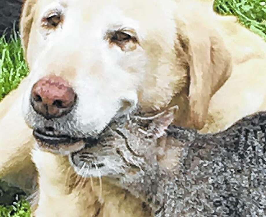A dog and a cat share a tender moment in the sunshine.