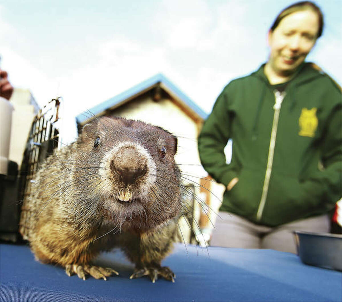 Murray, a groundhog from the TreeHouse Wildlife Center, gets a closer look at the photographer's camera after seeing his shadow in a ceremony held at the Alton Visitor Center in downtown Alton last February.
