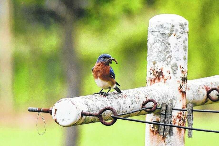 A bird takes a lunch break on an old clothesline.