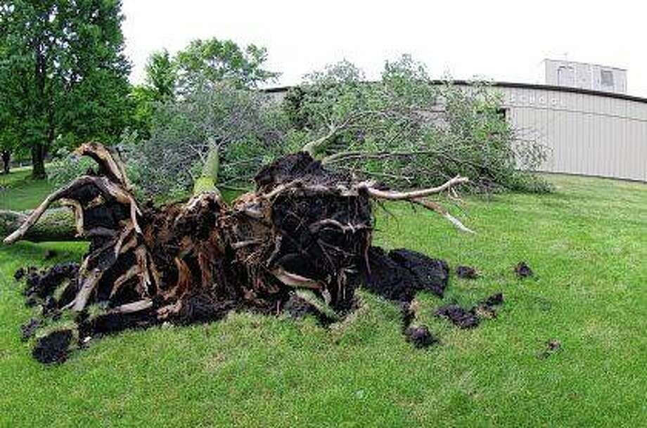 A large tree was uprooted, split and blown over on the north side of Eisenhower Elementary School in Jacksonville during Wednesday night's storm. No one was injured, and although parts of the tree came to rest against the building, school officials do not believe the building sustained any damage. Strong storms could return to the region today, with thunderstorms expected this afternoon and more severe thunderstorms likely tonight. Weather forecasters say storms tonight could bring heavy downpours, large hail and damaging winds. Photo: David Blanchette | For The Journal-Courier