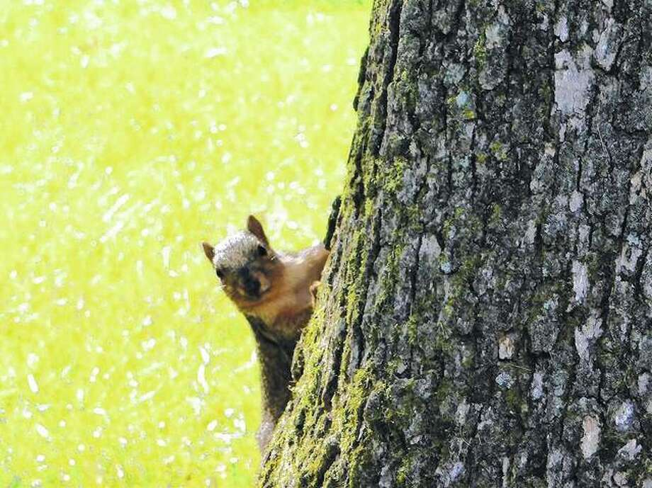 A squirrel seems surprised to have been spotted while playing a game of hide and seek with people.