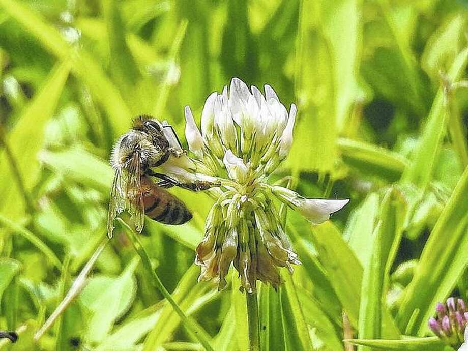 A bee makes a quick stop to collect pollen for the day. Photo: Elizabeth King | Reader Photo