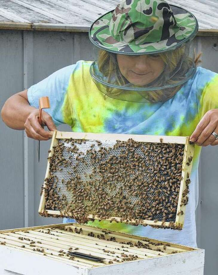 Veronika Thies of Jacksonville checks a frame in her beehive. A beehive is composed of hexagonal cells made of beeswax, called a honeycomb. The bees use the cells to store food — honey and pollen — and to house their brood — eggs, larvae and pupae. Photo: Greg Olson | Journal-Courier