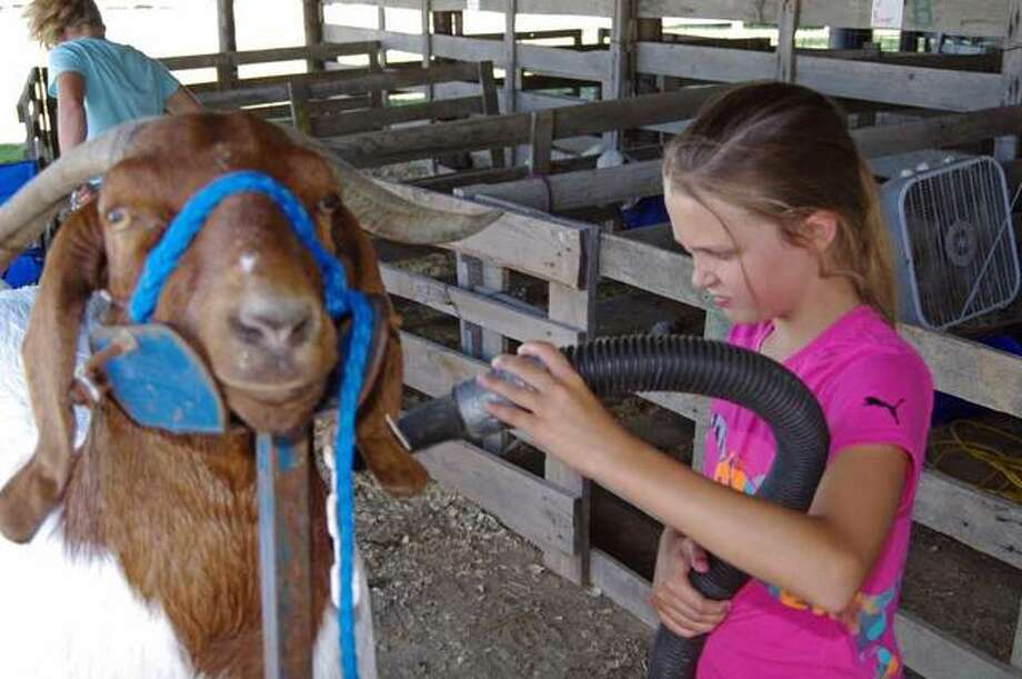 Nila Beatty, 10, of Jerseyville dries a goat she has entered in a livestock show at the Jersey County Fair.