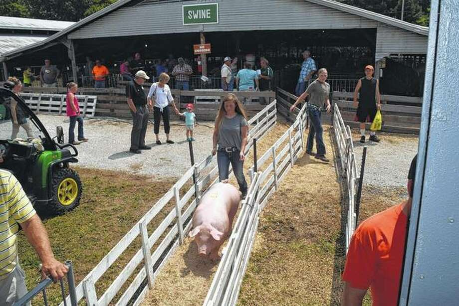 Skylar Bartz, daughter of Todd Bartz and Angela Leavell-Bartz of Murrayville, takes a Chester barrow hog into the ring Monday at the Morgan County 4-H livestock auction at the fairgrounds.