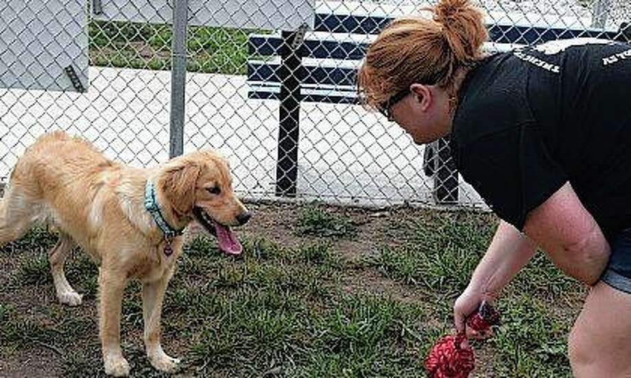 Jamie Yording of Jacksonville plays with her 7-month-old golden retriever, Lyla Rae, at the Jacksonville Dog Park on Monday. Photo: Samantha McDaniel-Ogletree | Journal-Courier
