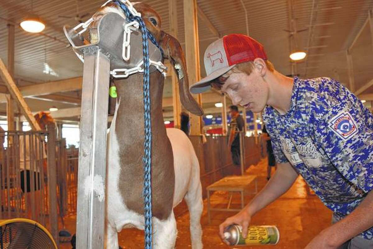 FILE - Mason Fricke, 14, of rural Chapin, grooms his reserve grand champion medium weight wether goat, Dak, at the Illinois State Fair.