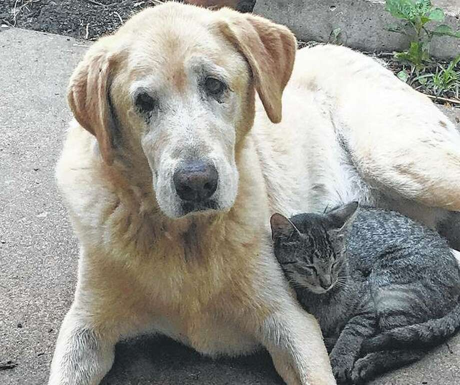 A dog and a cat don't let their differences interfere with spending the afternoon hanging out. Photo: Joy Harris | Reader Photo
