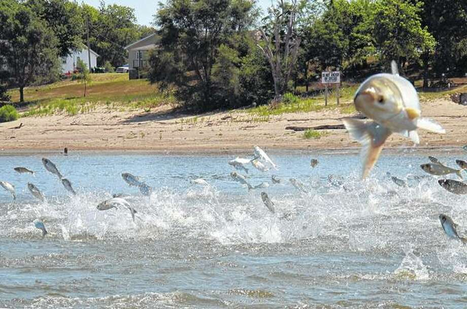 Asian carp, jolted by an electric current from a research boat, jump from the Illinois River near Havana. John Flesher | AP