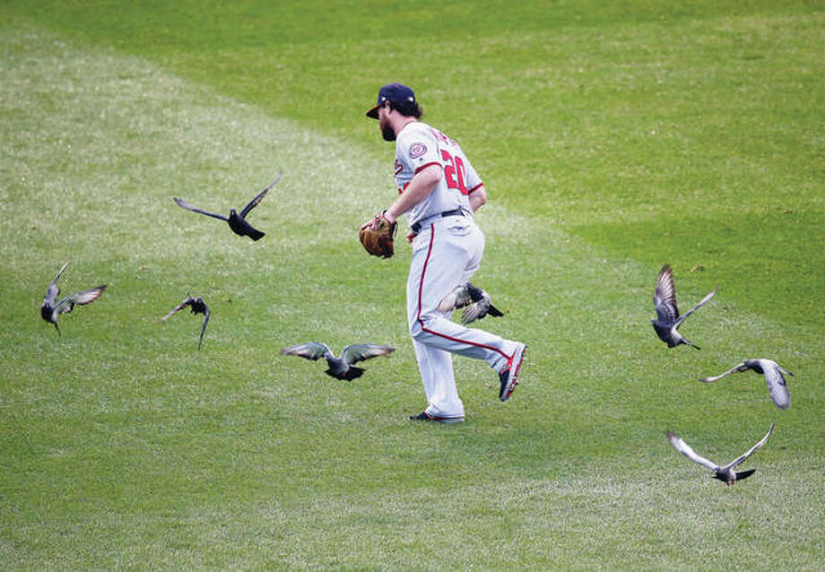Washington Nationals' Daniel Murphy tries to chase off birds Wednesday during the first inning of Game 4 of the National League Division Series against the Chicago Cubs in Chicago.