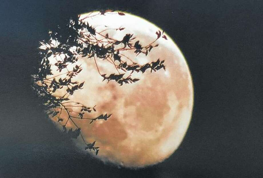 Trees cast a silhouette against the full moon this week. Photo: Joy Harris | Reader Photo