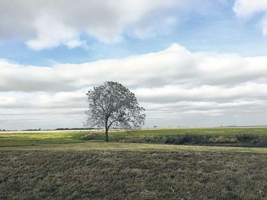 A lone tree reaches toward the blue autumn sky in Morgan County.