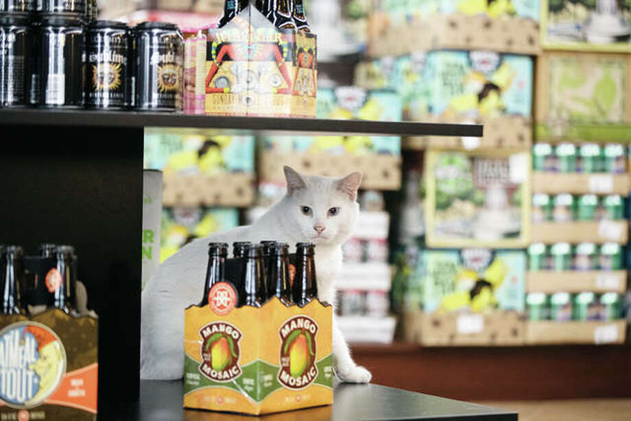 Gary, a cat adopted through Animal Care and Control Team of Philadelphia's working cat adoption program, sits on a shelf on the retail floor at his new home at Bella Vista Beer Distributors in Philadelphia. The program places cats who have behavioral challenges with non-traditional homes such as factories and stores and their presence have helped control the rodent population on a property. Photo: Matt Rourke | Associated Press