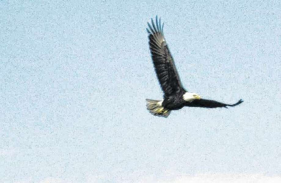 An eagle flies in the sky over rural Greene County. Photo: Beverly Watkins   Reader Photo