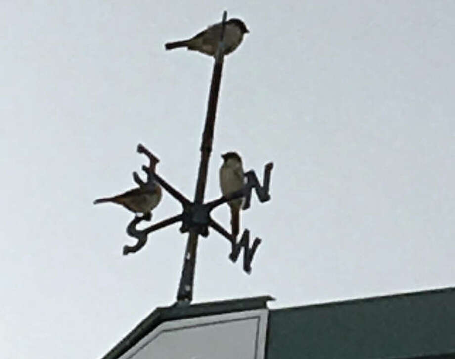Three birds share different directions on a weather vane.