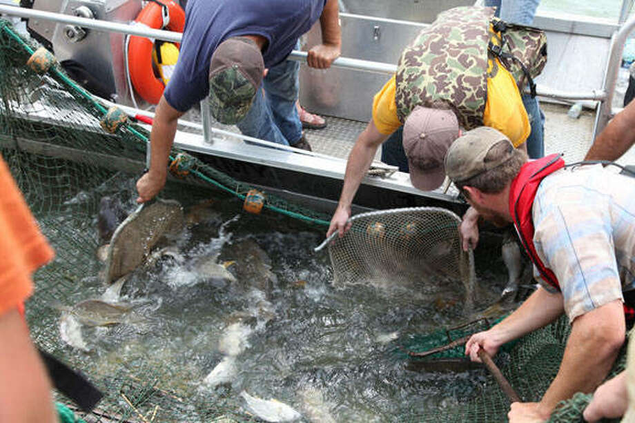 Crews search for invasive Asian carp following several discoveries of their genetic material in Lake Calumet. No Asian carp were found.
