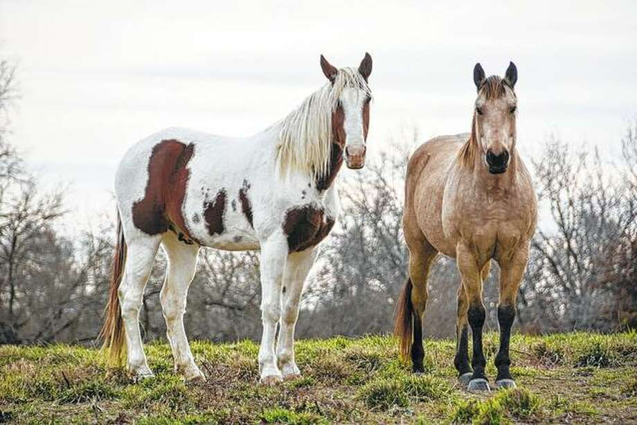 Horses strike a pose on a farm near Waverly.