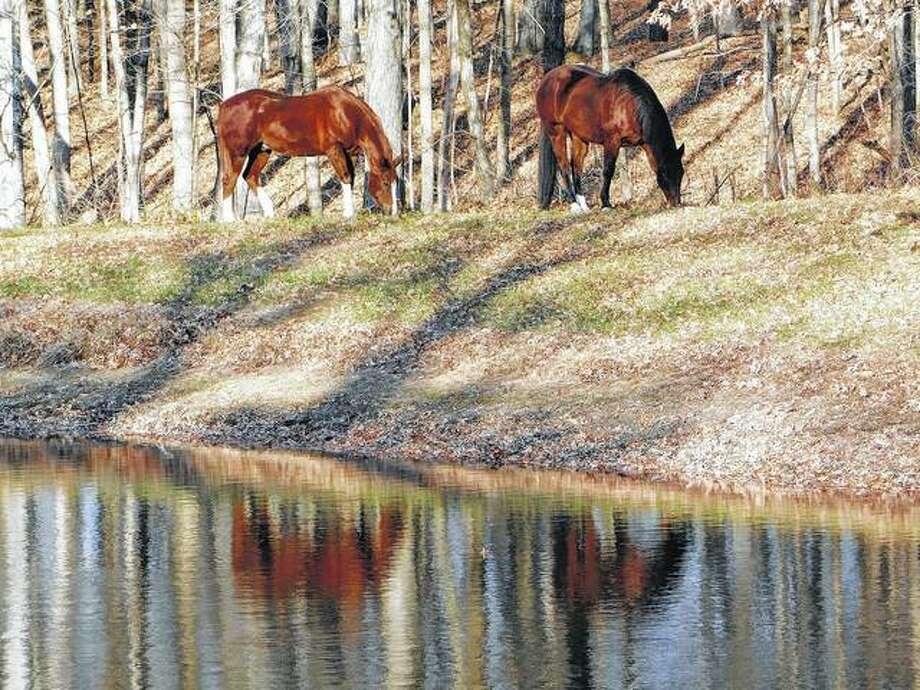 Horses are reflected in a lake while out for a winter stroll.