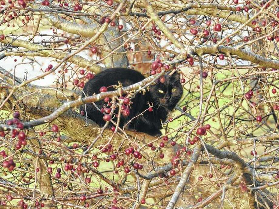 A cat enjoys an out-of-the-way perch in a tree near Bluffs.