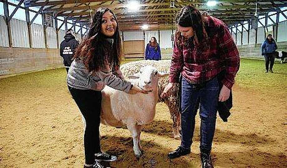 Evelyn Sanchez and Maggie Drost, students in McHenry School District 156, interact with a sheep at Main Stay Therapeutic Farm in Richmond.They are part of an experimental program teaching students to learn positive coping skills while working with farm animals. John Starks | Daily Herald (AP)