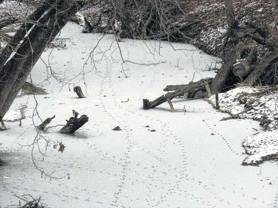 Animal tracks are all that disturb the snow in a creek bed in rural Macoupin County.