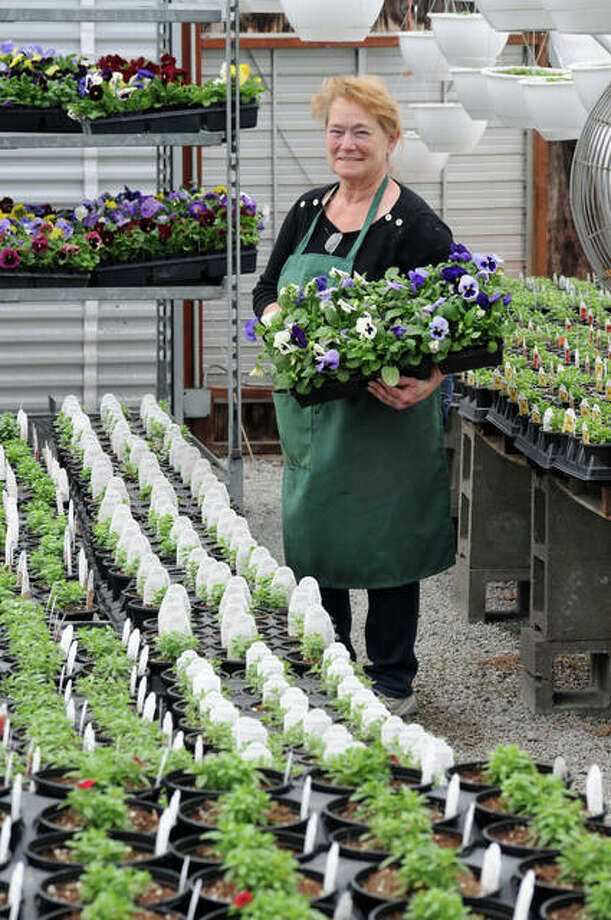 Kathy Ralston tends plants in a greenhouse at Community Seed and Feed in East Alton. Ralston said spring bulbs should be fine during this cold snap, but the frost might cause bloom loss on fruit trees.