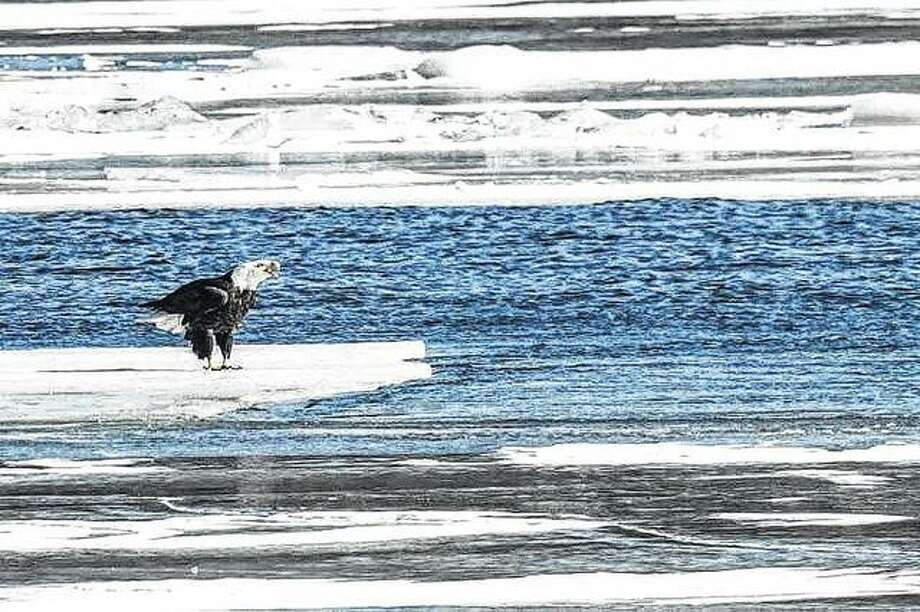An eagle rides along on an ice float in the river.