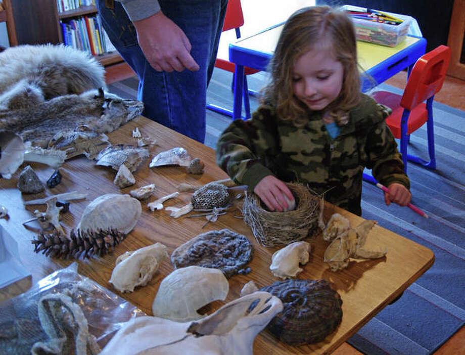 Katelyn Clagg, 3, of Brighton, examines objects Sunday during TreeHouse Wildlife Center's Spring Fling.