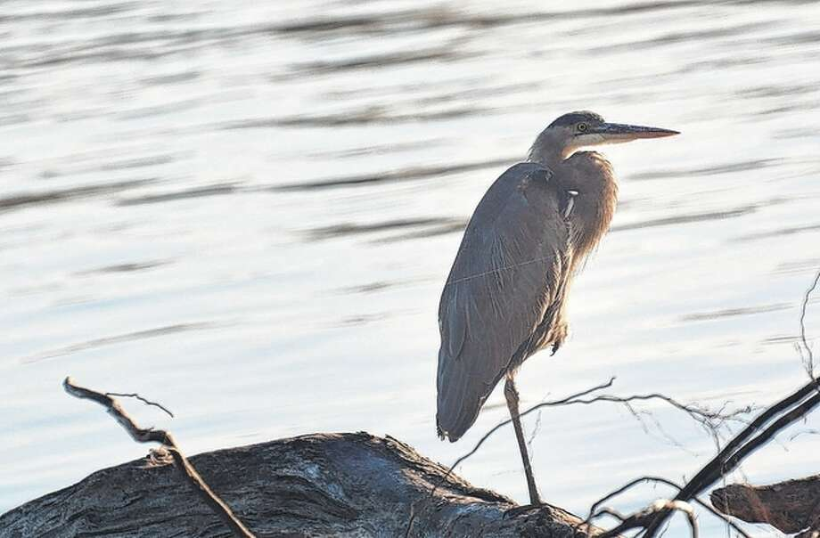 Jeff Ruzicka | Reader photo A blue heron keeps a watchful eye over the peaceful blue river in Pike County.