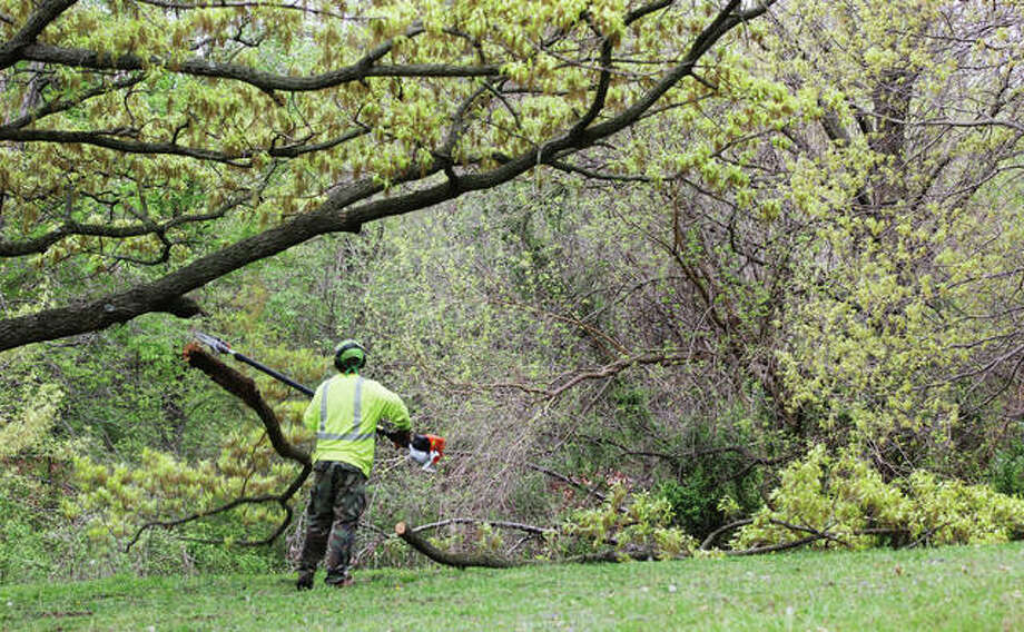 Scott Robertson, of the Alton Public Works Departments Forestry Division, trims trees in Gordon Moore Park Monday in preparation of cutting them down to create a temporary access road.