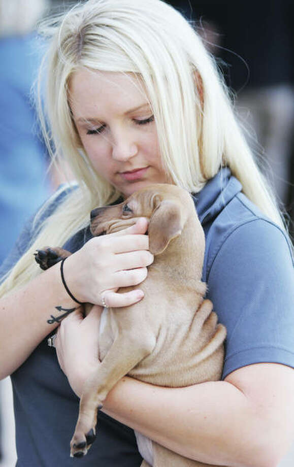 Shae Eaton, a clerk with Madison County Animial Control, holds one of the puppies available for adoption at the first microchip clinic and adoption day at the Madison County Administration Building. The event was held in conjunction with the passage of a No-Kill resolution by the County Board later that evening.