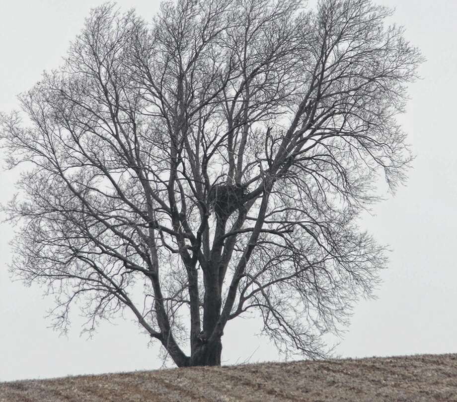 Bill Weller | Reader photo A tree near Jacksonville provides a home for an eagle nest.