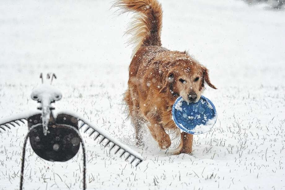 Max the dog enjoys a little play time in the snow in his Pike County backyard. Most of the region saw 3 or more inches of snow overnight and into the morning Wednesday.