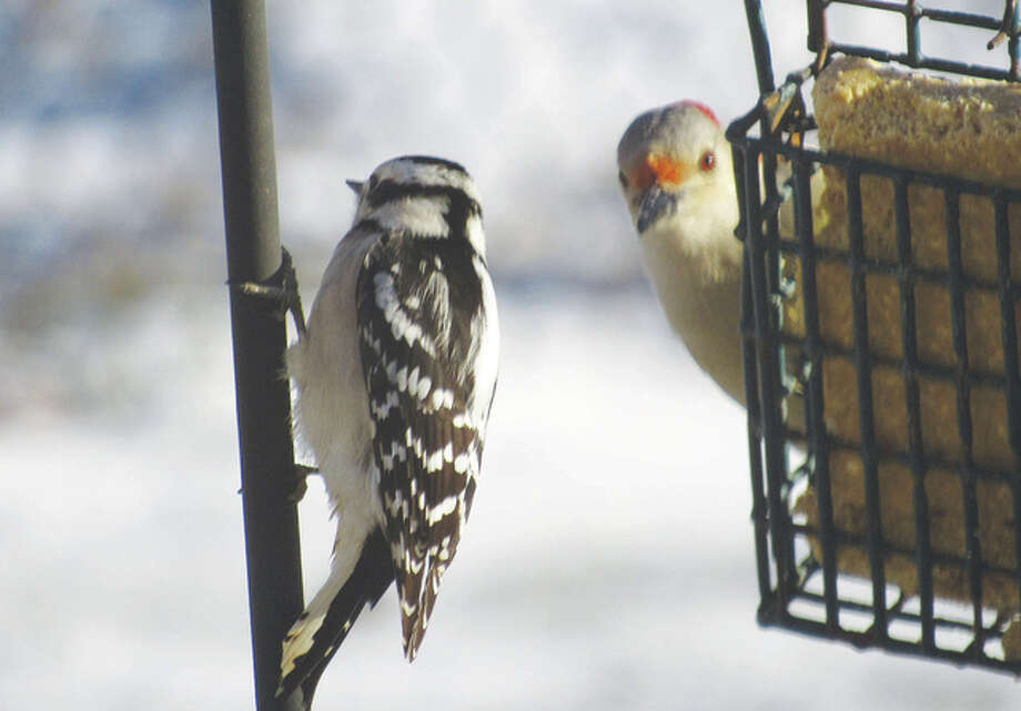 A bird seems to be waiting patiently for its feathered friend to finish a meal at the feeder.