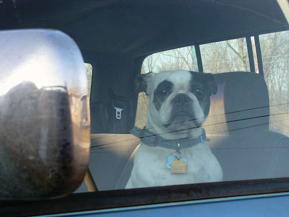 A dog waits patiently in a truck for its owner to go for a ride.
