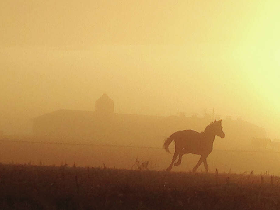 A horse enjoys a run on a farm west of Greenfield, oblivious to the thick layer of fog enveloping the area. Most of the region was under a fog advisory Tuesday evening into Wednesday morning as visibility dropped. (See reader-submitted photos on Page 8A.) Photo: Laurie Beavers | Special To The Journal-Courier