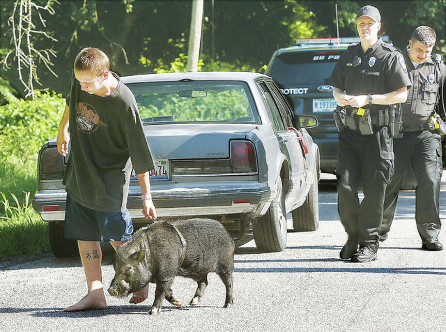 Michael Robertson walks his pig over to a yard Monday in the 2400 block of Oakhurst Drive in Alton to get some food and water. Robertson had left the pig in his Oldsmobile for a short while, prompting a concerned citizen to call about the animal's well-being. Alton police and the Alton Animal Control responded to the call, but the pig was just fine. Robertson said he was just visiting the city; pigs are not allowed as pets in Alton. An animal control officer said that no farm animals are allowed the city except chickens. Photo: John Badman|The Telegraph