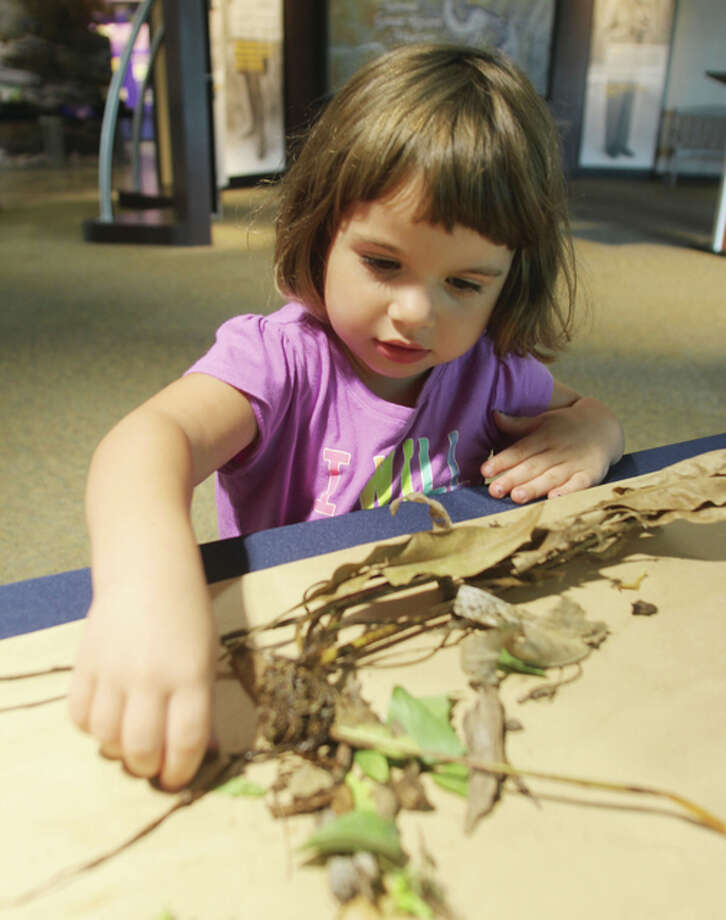 Sasha Heil, 3, of Alton, tries to make a bird's nest out of materials she has gathered outside at the National Great Rivers Museum Monday morning. She participated in Make Like a Bird, a nest-building activity that is part of this year's Kid'Cation, a series of family-friendly events presented by the Alton Regional Convention and Visitors Bureau.