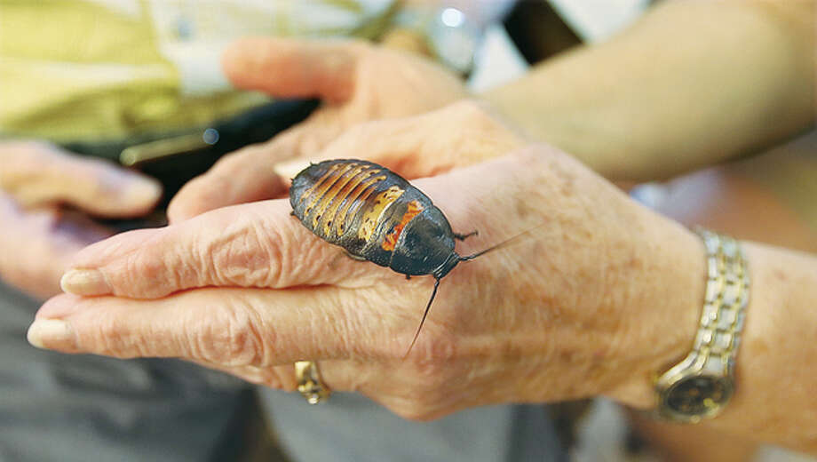 Many residents and visitors to The Fountains at Godfrey allowed a Madagascar Hissing Cockroach to climb around on their hands and arms as part of the presentation.