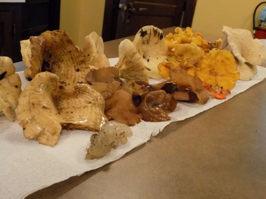 A sample of native, autumn mushrooms that can be found in Illinois