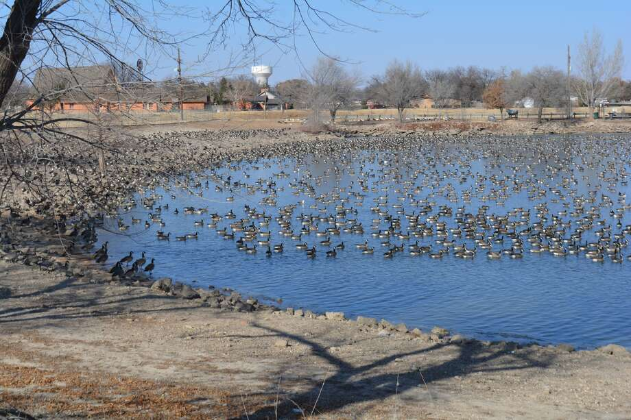 The city of Plainview recently opened bids for the renovations at the Travis Trussell Duck Pond. Photo: William Carroll, Plainview Herald