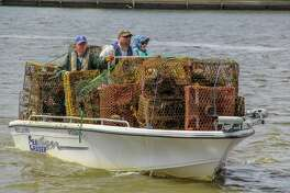Volunteers have removed more than 32,000 derelict crab traps from Texas bays, saving hundreds of thousands of crabs and other marine life, during past annual clean-up efforts.